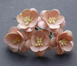 Cherry blossom flowers - peach