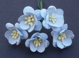 Cherry blossom flowers - blue